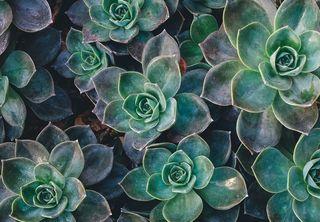 Succulentsphoto-1446071103084-c257b5f70672