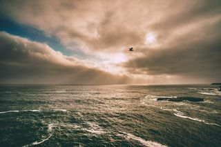 Birdinflightphoto-1434472007488-8d47f604f644